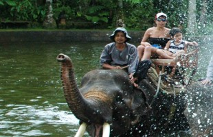 Ayung Rafting and Elephant Safari Ride